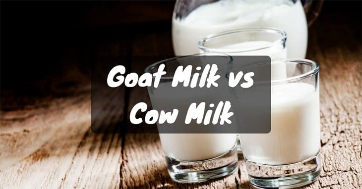 Which Is Better? Goat Milk or Cow Milk