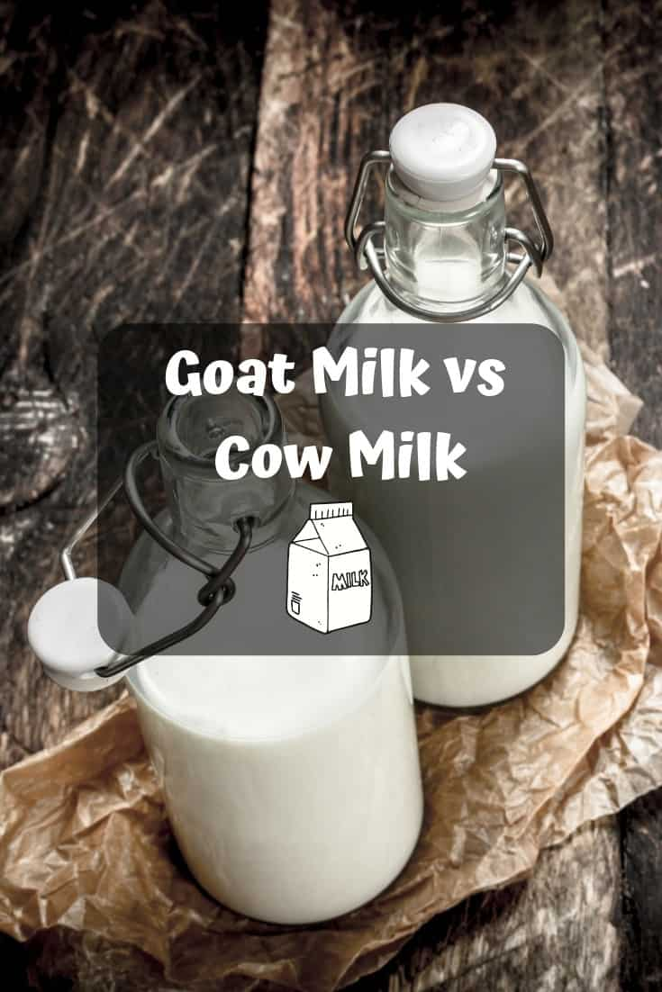 Goat milk vs cow milk – who's the winner in this lactose face-off?