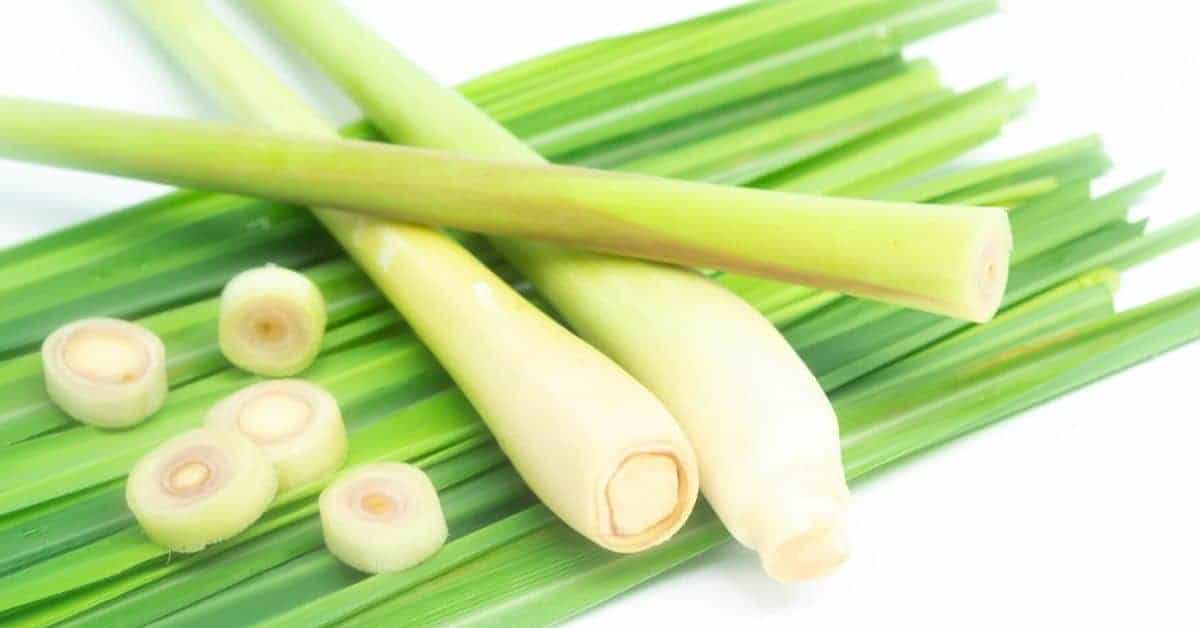How To Freeze Lemongrass Throughout The Year